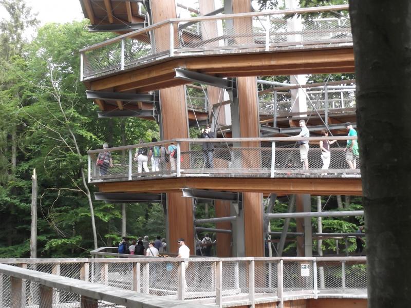 Baumwipfelpad-Turm